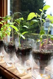 self watering plants self watering planters for starting seeds shelterness