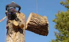 tree removal service tree cutting trimming services faqs
