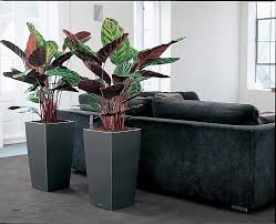 le de bureau verte bureau plantes de bureau sans soleil hd wallpaper photos