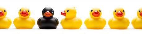 lootok news getting your ducks in a row lootok u0027s one of a kind
