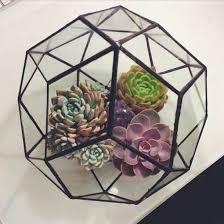 jewels plants hipster cactus terrarium geometric lifestyle