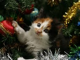 cat christmas 10 tips to cat proof your christmas tree petswelcome