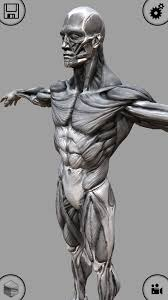 Anatomy And Physiology Apps Anatomy App For Artists Image Collections Learn Human Anatomy Image