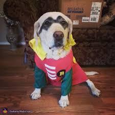 Batman Robin Dog Halloween Costumes Batman Robin Halloween Costume Photo 2 4