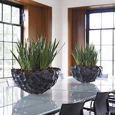Plants For Office Stevenage Office Plant Rental In Stevenage