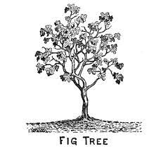 the three tree of olive fig vine judge