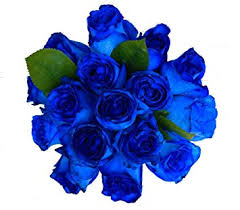 blue roses 2 dozen farm fresh blue roses bouquet by