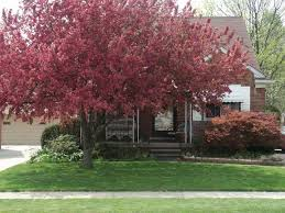 Best Trees For Backyard by Kozmic Dreams Virtual Home Tour