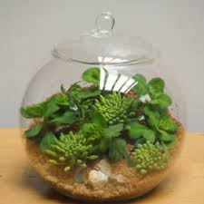 glass terrarium container bell jars with from ebay co uk