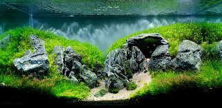 Nature Aquascape The Top 10 Most Beautiful Freshwater Aquascapes Of 2012 Fpsbutest