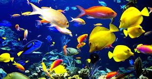 Buy Ornamental Fish 15 Most Popular Freshwater Aquarium Fish Pets World