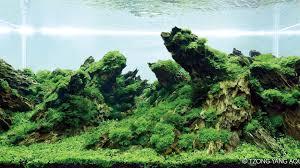 japanese aquascape planted tank jurang mayit by herry rasio aquarium design contest