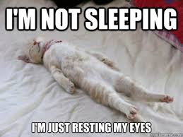 Sleepy Kitty Meme - 30 most funny sleeping meme photos you have ever seen