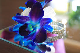 blue and purple orchids eletragesi blue dendrobium orchid images