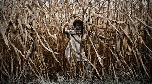 13 creepy corn mazes and haunted hayrides modern farmer