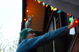 mancat monday putting up the lights mousebreath