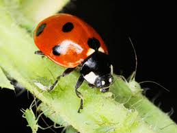 keep ladybugs out of your house hgtv