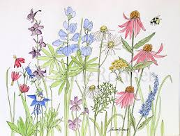 watercolor wildflowers in the garden illustration