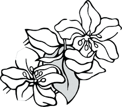 coloring pages coloring sheets flowers mindful flowers coloring