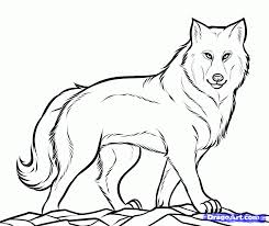 wolf drawings step by step how to draw a gray wolf timber wolf