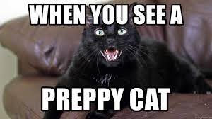Talking Cat Meme - when you see a preppy cat n2 the talking cat meme generator