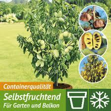 Tropische Pflanzen Im Garten Exotische Pflanzen U0026 Obstbäume Kaufen Bei Ahrens Sieberz