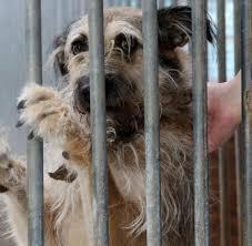 Tierheim Baden Baden Tierschutzbund Jedem Zweiten Tierheim Droht Die Insolvenz Welt