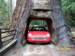 Chandelier Tree California Chandelier Tree Leggett California Ca Drive Thru Redwo Flickr