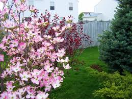 looking for suggestions on purchasing a flowering dogwood tree