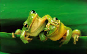 frogs clip art library