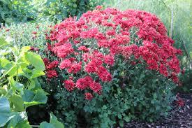 native plants for butterfly gardening benton soil u0026 water extension master gardener