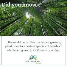bamboo land nursery and parklands bambooland hashtag on twitter