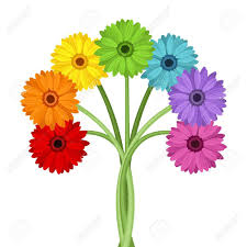 gerbera bouquet bouquet of colorful gerbera flowers vector illustration royalty