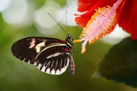 bitzoos butterfly on a flower image bitzoos