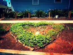 Urban Vegetable Garden by Cultivating Havana An Organic Farming And Urban Garden Revolution