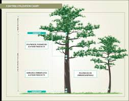 forest inventory utilization