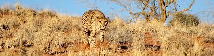 disclaimer fit cheetahs