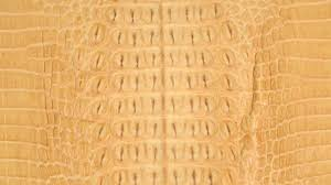 Buy Leather For Upholstery Crocodile Leather Roje Exotic Leather