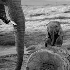 desktop hd cartoon pics of elephants