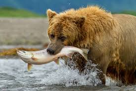 Animal Planet Documentary Grizzly Bears Full Documentaries - bears disneynature