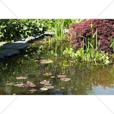 Decorative Pond Small Garden Pond With Wooden Bridge Gl Stock Images