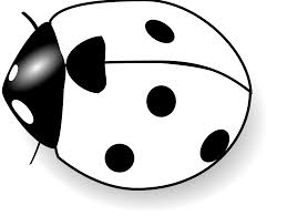 black and white ladybug clipart free download clip art free