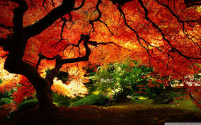 Beutifull Beautiful Autumn 4k Hd Desktop Wallpaper For U2022 Dual Monitor