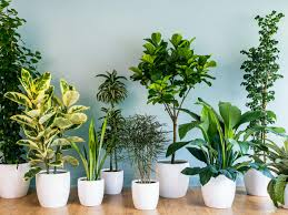 ultimate guide to indoor plants sunset