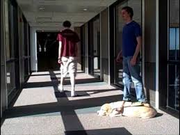 How To Interact With Blind People Greeting And Interacting With A Blind Or Visually Impaired