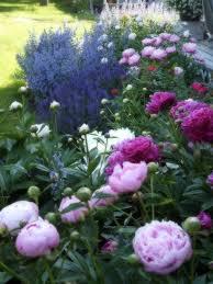 best 25 flowers garden ideas on pinterest garden flower plants