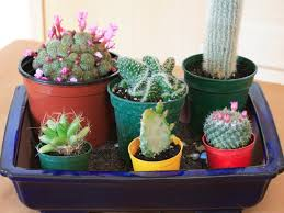 Kitchen Cactus Create An Indoor Desert Garden Hgtv