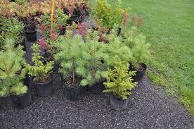 trees and shrubs wholesale retail nursery stock