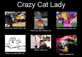Crazy Cat Lady Memes - crazy lady meme cat lady meme