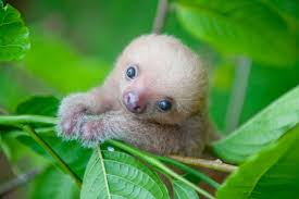 Sloth Fitness Meme - cute sloth pictures adorable photos of sloths reader s digest